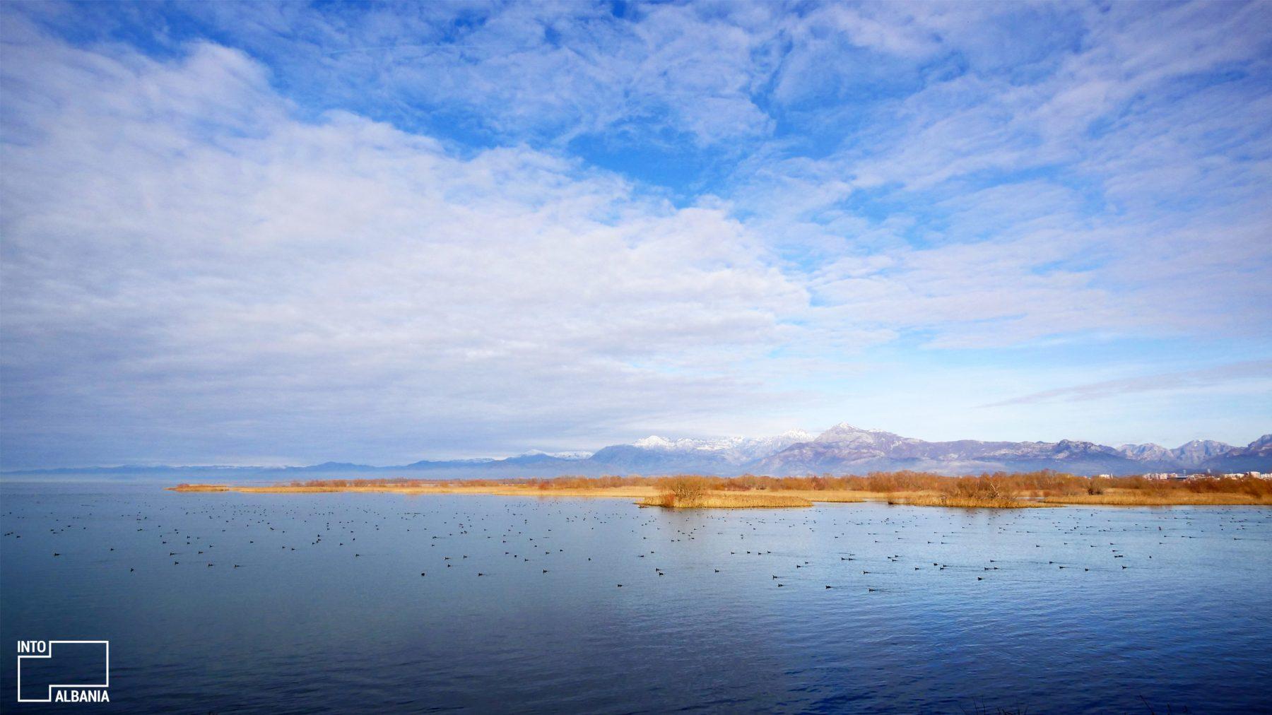 Shkodra Lake-6