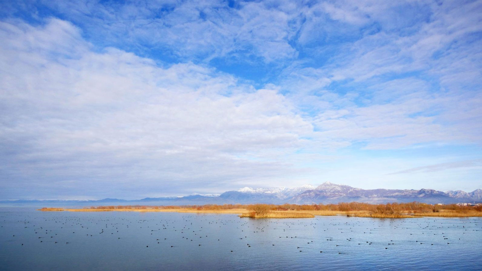 Shkodra's-Lake-2