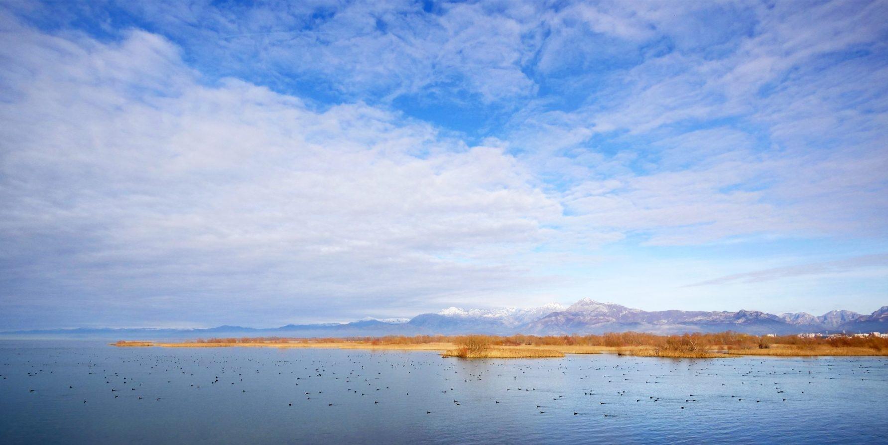 Shkodra's Lake-6